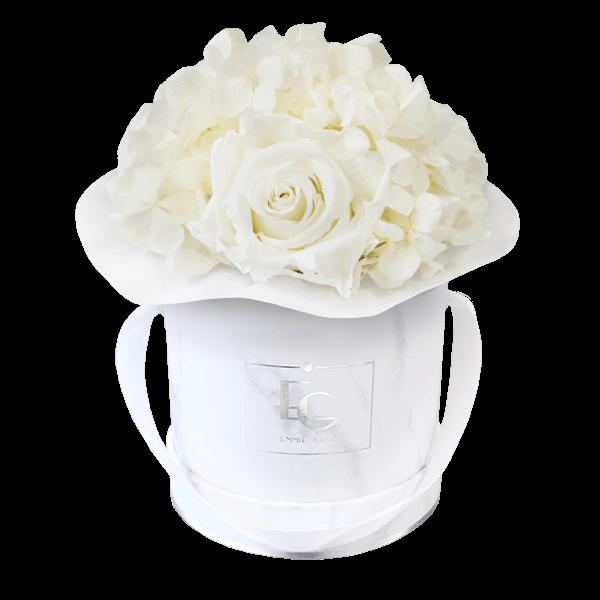 Splendid Hydrangea Infinity Rosebox   Pure White   XS