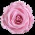 Bridal Pink