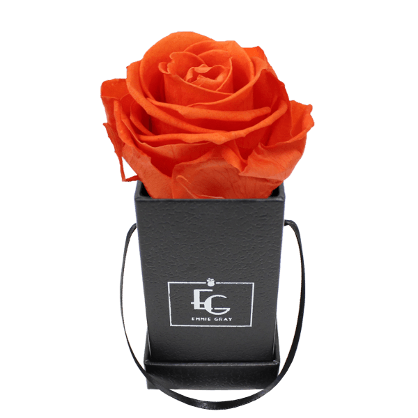 CLASSIC INFINITY ROSEBOX | ORANGE FLAME | XXS