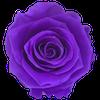 Violet Vain